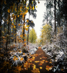 First Snow at Sunnyside Acres (Martin Smith - Having the Time of my Life) Tags: sunnysideacres surrey southsurrey britishcolumbia martinsmith ©martinsmith nikond750 snow pano panorama 4photopano samyang140mmf28 mapleleaves forest canada ca