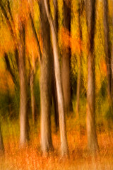 Fall Swipe-FAA 258 (sunspotimages) Tags: fall forest forestswipe trees treesswipe tree treeswipe nature artwork artistic landscape icm