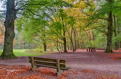 just sit and relax (www.petje-fotografie.nl) Tags: bomen gelderland ptjefotografie bos herfst arnhem