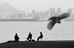 """3 + 1"" ... (by crystal poon) (hugo poon - one day in my life) Tags: xt1 27mm hongkong northpoint hoiyustreet kowlooneast kaitakcruiseterminal victoriaharbour waterfront saturday afternoon friends companions fishing three bird haze city skyline skyscrapers reminiscing islandeasterncorridor crystalpoon"