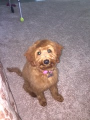 Ruby Red's Ruby has the sweetest face!