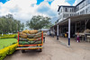 Munnar, India (Ðariusz) Tags: amazing journey south india exploring wonderful tea plantations phtoos photos photographer teas drink easy cheap grass forest landscape animal tree sky elephants metoo field wood people munnar