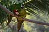 yes... right there (johndifool) Tags: bird parksama papagei parrot spain parcsama spanien vogel green