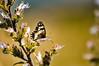 Butterfly (fyavuz666) Tags: butterfly sigma apo 70300 nikon d90