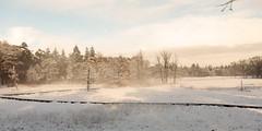bij de waterpomp (doevos) Tags: bos gelderland hogeveluwe npdhv nederland sneeuw veluwe winter forest neige snow woud
