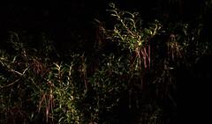 _MG_2893.CR2 (jalexartis) Tags: nightphotography night nightshots rain