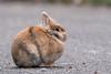 _D510770 (De Hollena) Tags: conejo kaninchen konijn rabbit