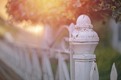 November Sunset... (KissThePixel) Tags: fence fencefriday fencebokeh fencephotography happyfencefriday happyfriday friday metalfence whitefence november light sunlight bokeh goldbokeh dof dofalicious depthoffield bokelicious sunset sunsets 50mm ailens nikkor f12 manuallens primelens