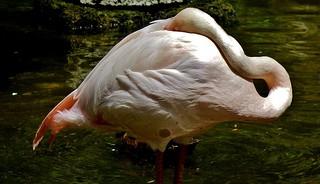 Vogelwelt , Flamingo , 75728/9203