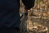 IMG_1296 (goaniwhere) Tags: wolf animal wolves wildanimal sanctuary