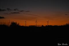 éoliennes plouguin novembre2017 (pamélaroué) Tags: plouguin éolienne iroise finistère campagne rural