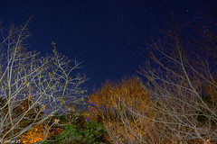 ORION (elmar35) Tags: sony ilce7r 28mm astro star orion stars night bulb tree