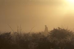 IMG_7610 (Sula Riedlinger) Tags: frost frostymorning sunrise sunriseinrichmondpark mistysunrise mist misty foggy greaterlondon londonroyalparks royalparks royalpark richmondpark richmond surrey weather