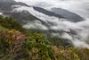 雲繞武陵 (鹽味九K) Tags: wulingfarm 楓葉 武陵農場 雲海 cloud maple 戶外 山 台七甲 武陵富野渡假村 autumn