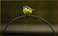 Handle with care ! (GABOLY) Tags: birds garden feeding kent england november 2017