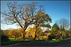Dark Lane, Lighter (Jason 87030) Tags: trees hedge bushes braunston village walk morning november 2017 sunny light sun northamptonshire sony ilce alpha northants a6000 lens tag nex road darklane local