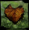 Mosaic in Heart! (jlynfriend) Tags: phonephoto screen window maple afternoon trees autumn leaf smileonsaturday onesingleleaf texture