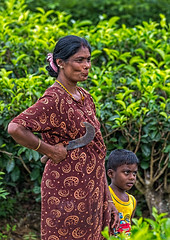 Mother and Child, Rothschild Tea Estate, Sri Lanka (bfryxell) Tags: child knife pussellawa rothschildteaestate srilanka teaplant teaplantation