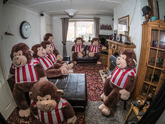 Monkey Party. . . (CWhatPhotos) Tags: sunderland strip football team photographs photograph pics pictures pic picture image images foto fotos photography cwhatphotos that have which with contain mk digital camera lens photo manipulation shopped layers party monkey monkeys soft toys together fun