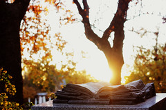 """""""You will always be one of my favorite stories"""" (Therese Trinko) Tags: retiro madrid fall books literature park parque spain travel europe sunset"""