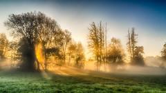 Lightpainting (ralfkai41) Tags: morgendämmerung sunrise landschaft sonne mist outdoor licht wald natur light bäume hdr dämmerung fog landscape sun foresr sonnenaufgang feld dawn trees nebel field