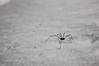 Stay positive (kisnikee) Tags: spider snow latefellow whatareyoudoinghere surprise winter optimism macro