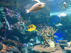 Coral reef fish (1) #toronto #ripleysaquarium #aquarium #fish #coralreef #latergram (randyfmcdonald) Tags: fish ripleysaquarium latergram coralreef aquarium toronto