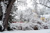 first snow (Wolfgang Binder) Tags: tree snow grass city landscape scenery tramway clock winter nikon d7000 zeiss distagon distagont2825