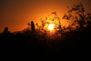 Sun and Cactus (craigsanders429) Tags: sunsetphotography sunsets sunset sunsetcolors plants cactus saguarocactus tucsonarizona sonorandesert desert sun mountains