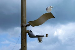 Lookout: Streetlights aren't what they used to be..... (markwilkins64) Tags: streetlights canon seagull hastings ruleofthirds curves clouds cloudscape