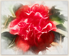 We don't see things as they are, we see them as we are. (Anais Nin) (boeckli) Tags: camellia flowers flower fleur flora kamelie red rot topaz topazimpression2 topazsimplify blume blumen blüten bloom blossom blossoms blooms outdoor textures texturen texture textur painterly