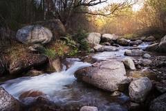 Río Ter 2 (jlmontes) Tags: largaexposicion longexposure arroyo spain pirineos girona otoño landscape paisaje cascada ríoter samyang14mm nikond3100