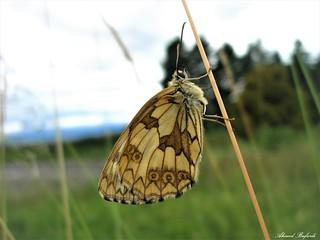 Butterfly 1489