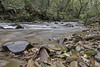 Horner Water (me'nthedogs) Tags: hornerwater river autumn horner exmoor somerset