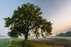 Baum im Brook (webpinsel) Tags: brook felder herbst landschaft morgenstiummung natur nebel sonnenaufgang sythen