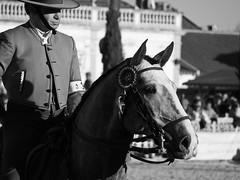 Winner (Chaudiere J) Tags: lusitano breed puro sangue golega cavalo horse cheval feira