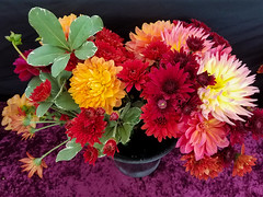 Day 318 ~ blast of color (champbass2) Tags: day318 day3182017 colorful mums dahlias galaxys7 pinecreekflowers