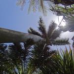 Botanic Garden - Durban thumbnail