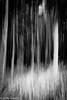 Deep in the forest (judy dean) Tags: judydean 2017 holi day hawaii eucalyptus trees icm sliderssunday