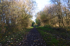 Silkstone - Wath old railway    November 2017 (dave_attrill) Tags: incline 1in40 great central railway electrified woodhead sheffield victoria manchester picadilly closed 1970 1955 stocksbridge engine transpennine upper don trail penistone wortley wadsley neepsend dunford bridge thurgoland tunnel oxspring barnsley junction huddersfield allweather cycleway bridleway footpath remains silkstone 2016 1981 dove valley no1 road tree grass sky worsbroughbranch