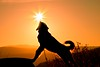 One day...I'll catch you... (stefan.pavic1) Tags: sun dog nikon i am nature sunlight hills serbia dimitrovgrad photography photo naturephoto light