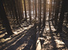 Light, Lines And Shadows (thobia_s - https://twitter.com/thobia_s - thobiasp) Tags: scandinavia norway snow forest woods perspective sunlight lines chaos shadows