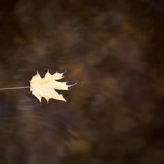 Baño fluvial (acativa) Tags: río hoja otoño fluvial playafluvial carballedo cotobad cotobade galicia tierrademontes cerdedocotobad textura textures minimal agua flotar paseo acativa