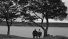 Contemplation on a Gray Day (vbd) Tags: pentax k3 vbd smcpentaxda55300mmf458ed vt vermont water newengland lake bay lakechamplain bw blackandwhite 2015 fall2015 handheld trees monochrome bench stalbansbay gray
