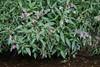 CKuchem-6711 (christine_kuchem) Tags: ackerblumen bach blühstreifen blüte blüten feldblumen natur naturschutz neophyt pflanze springkraut sumpf ufer uferpflanzen wiese wiesenblume wildblumen drüsiges eingewandert gewässer naturnah rosa