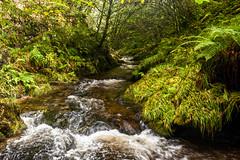 Wilderness 01 - Lydford Gorge (L I C H T B I L D E R) Tags: england devon dartmoor lydford schlucht gorge wildnis wilderness stream creek wald forest nature natur nationaltrust