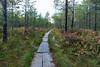 nearby swamp (kipuna) Tags: suo pitkospuut syksy pomponrahka turku suomi finland autumn