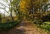 Prenons le chemin ! (Jacques Isner) Tags: automne nature pentax pentaxart pentaxflickraward pentaxk1 plainedereymure isère samyang14mm samyang jacquesisner