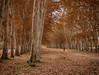 De paseo (Carlos Javier Pérez) Tags: otoño senda mantodehojas ocres perspectiva árboles rojo aranjuez madrid nikon d500 tokina tokina1116mm depaseo