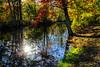 Backlit Trees & Reflections (Bruce Livingston) Tags: reflections fallcolors autumncolors what morriscanal musconetcongriverwatershed fujix100f